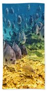 Oceans Below Beach Towel