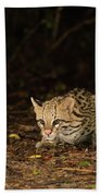 Ocelot Crouching At Night Looking For Food Beach Towel