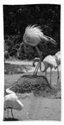 Odd Bird Out In Black And White Beach Towel
