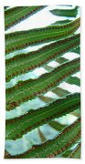 Office Art Ferns Green Forest Fern Giclee Prints Baslee Troutman Beach Towel
