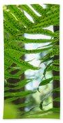 Office Art Ferns Redwood Forest Fern Giclee Prints Baslee Troutman Beach Towel