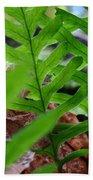 Office Art Forest Ferns Green Fern Giclee Prints Baslee Troutman Beach Towel
