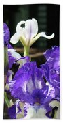 Office Art Prints Iris Flower Botanical Landscape 30 Giclee Prints Baslee Troutman Beach Towel