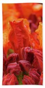 Office Art Prints Orange Azaleas Flowers 9 Giclee Prints Baslee Troutman Beach Towel
