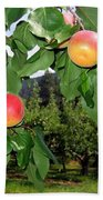Okanagan Apricots Beach Towel