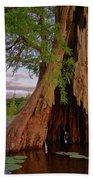 Old Cypress Trunk Beach Towel
