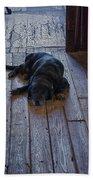 Old Dog Old Floor Beach Towel