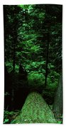 Old Growth Forest At Lost Lake On Mount Hood Beach Towel