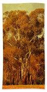 Old Gum Tree Beach Towel