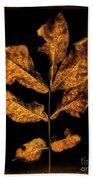 Old Hickory Leaf Beach Towel