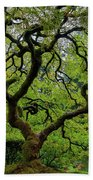 Old Japanese Maple Tree Beach Towel