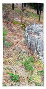 Old Pine Stump Beach Towel