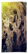 Old Sacred Olive Tree  Beach Towel