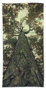 Old Sugar Maple Tree Beach Towel