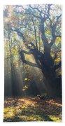 Old Tree And Sunbeams Beach Towel