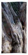 Old Tree Beach Towel