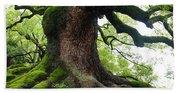 Old Tree In Kyoto Beach Towel