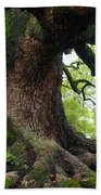 Old Tree In Kyoto Beach Towel by Carol Groenen