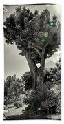 Old Tree In Sicily Beach Towel