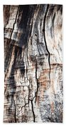 Old Tree Stump Tree Without Bark Beach Towel
