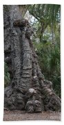 Old Trunk In The Swamp Beach Towel