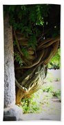 Old Wisteria Beach Towel