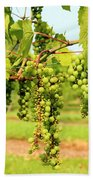 Old York Winery Grapes Beach Towel