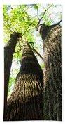 Oldgrowth Tulip Tree Beach Sheet