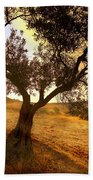 Olive Tree Dawn Beach Towel
