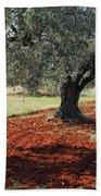Olive Trees Beach Towel