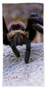 One Big Hairy Spider Beach Towel