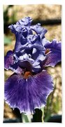 One Sole Iris In Bloom Beach Towel