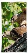 Cooper's Hawks Mating Beach Towel