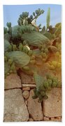 Opuntia Cactus In The Sunset Beach Towel