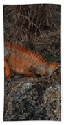 Oranage Iguana Beach Towel