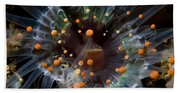 Orange And Black Anemone, Komodo Beach Towel