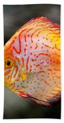 Orange Aquarium Fish In Zoo Beach Towel