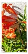Orange Trumpet Flowers At Pilgrim Place In Claremont-california  Beach Towel