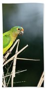 Orange-fronted Parakeet Beach Towel