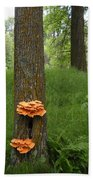 Orange Fungi On A Tree Beach Towel