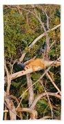 Orange Iguana  Beach Sheet