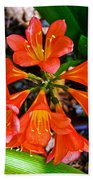 Orange Trumpet Flowers At Pilgrim Place In Claremont-california Beach Towel