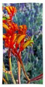 Yellow-orange Kangaroo Paws At Pilgrim Place In Claremont-california- Beach Towel