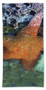 Orange Starfish Beach Towel