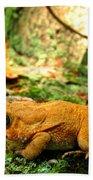 Orange Toad Beach Towel