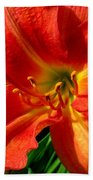 Orange Trumpeting Lily Beach Towel