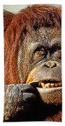 Orangutan  Beach Towel