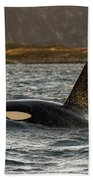 Orca #3 Beach Towel