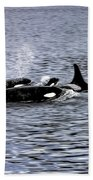 Orcas, The Killer Whales Beach Towel