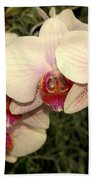 Orchid 19 Beach Towel
